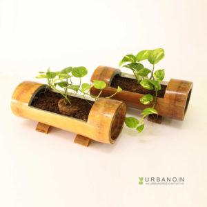 tabletop-Planter