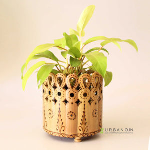 Designer-Planter