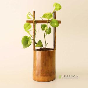 Bamboo-Planter