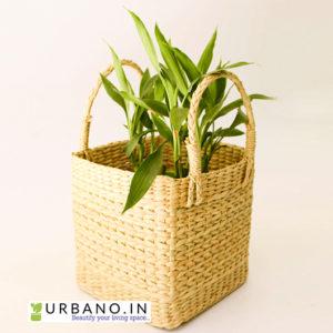 square kauna grass planter