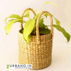 round grass planter