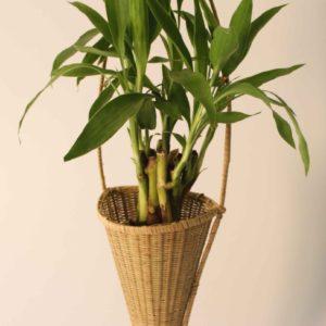 small-bamboo