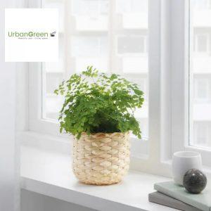 mini-woven-bamboo-planter
