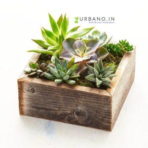 wood succulent plant
