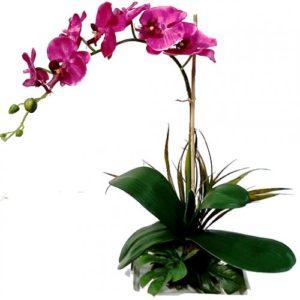Dendrobium Purple Orchids Plant