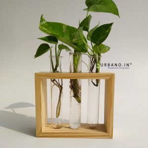 Tabletop pinewood planter